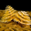 Marine worm - Foto Stock