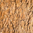 Bark — Stock Photo #7452640