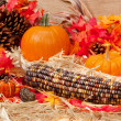 Autumn theme with corn — Stock Photo #7453071