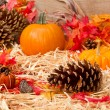 Stock Photo: Autumn theme with pine cone