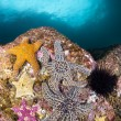 Starfish on Reef — Stock Photo #7453646