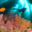 Colorful underwater reef - Foto Stock