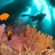colorful underwater reef — Stock Photo #7454136