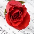 Red rose on sheet music — Stock Photo #7454417