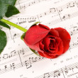 Piano rose — Stock Photo #7454420