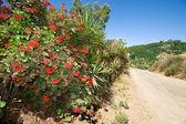 Roadside flowers — Stock Photo