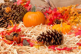 Autumn theme with pine cone — Stock Photo
