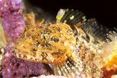 Colorful Fish — Stock Photo