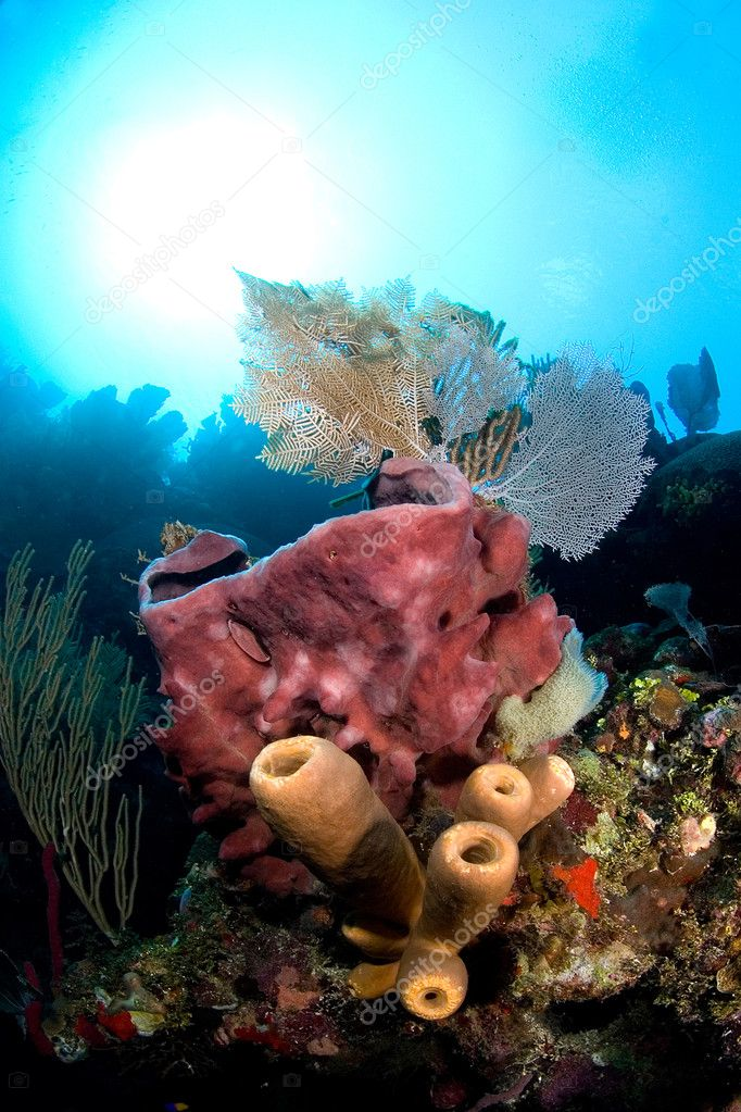 A giant pink barrel sponge is adorned with tube sponges and gorgonian sea fans — Stock Photo #7452034