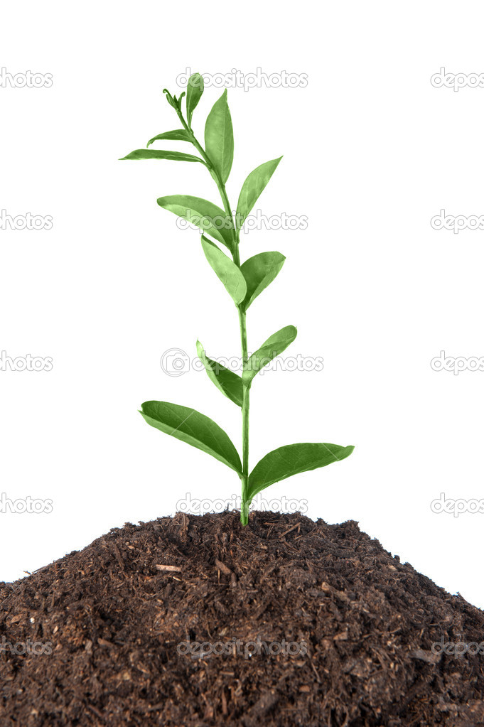 A plant growing from a heap of soil infers new beginnings.  Stock Photo #7453811