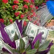 Stock Photo: Money plant being watered