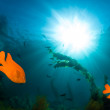 Underwater sunlight — Stock Photo