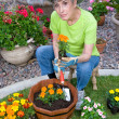 Adult planting flowers — Stock Photo #7638361