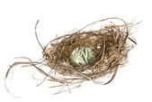 Financial nest egg — Stock Photo
