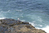 Fisherman on remore reef — Stock Photo