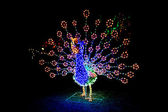 Lighted peacock display — Stock Photo
