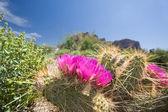 Primavera nel deserto — Foto Stock