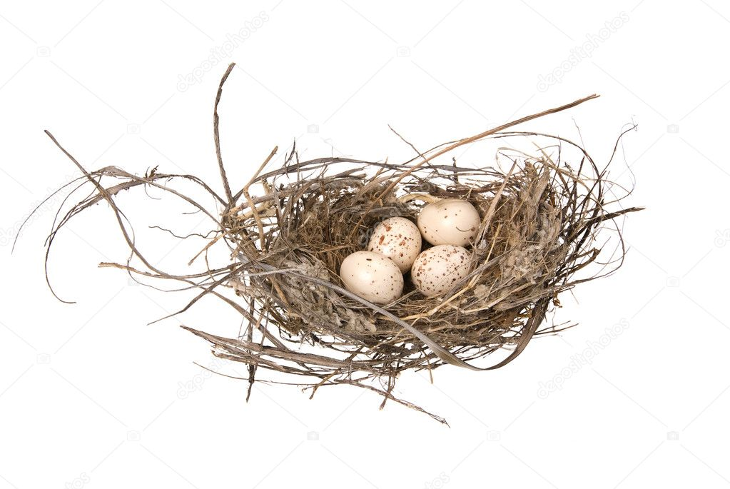 A birds nest with eggs isolated on a white background. — Stock Photo #7637047