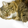 Whiskered and fluffy cat — Stock Photo