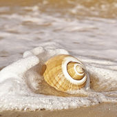 Seashell with Sea Foam — Stock Photo