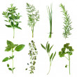 Herbs Collection — 图库照片