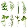 Herbs Collection — Foto de Stock