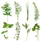 coleção de ervas — Foto Stock
