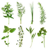 Herbs Collection — Foto Stock