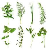 Raccolta di erbe — Foto Stock