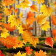 Stock Photo: Autmn leaves