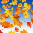 Autmn leaves - Stock Photo