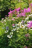 Wild flowers background — Stock Photo