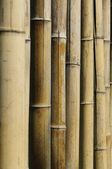 "Bamboo stalks (Phyllostachys vivas ""Aureocaulis"") background — Stock Photo"