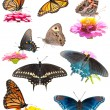 Stock Photo: Collage of bright, colorful butterflies on white