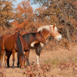 Three horses standing close to each other in a fall pasture — Stock Photo