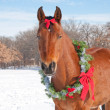 Stock Photo: Red bay horse wearing Christmas wreath