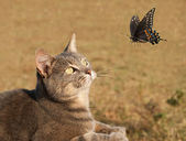 Beauttiful kitty cat curiously watching a butterfly in flight — Stock Photo