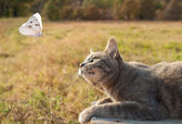 Blue tabby kitty cat watching a white butterfly — Stock Photo