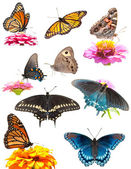 Collage of bright, colorful butterflies on white — Stock Photo
