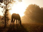 Silhouette d'un pâturage cheval contre le soleil du matin — Photo