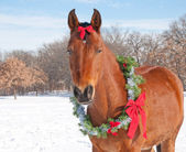 Red bay horse wearing a Christmas wreath — Stock Photo