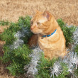 Red tabby kitty cat in a Christmas wreath with a red bow and silver tinsel — Foto de Stock