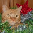 Beautiful orange tabby kitty cat inside a Christmas wreath — Stok fotoğraf