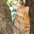 Stock Photo: Handsome orange tabby cat up in tree