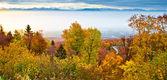 Schweizare skog hösten visa — Stockfoto