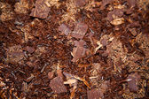 Shredded Chocolate — Stock Photo