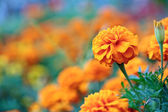 Beautiful orange flower on blurred plants background — Stock Photo