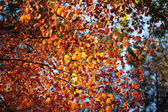 Colourful dry leaves with selected focus — Stock Photo