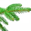 Branch of Christmas tree — Stock Photo