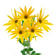 Yellow flowers — Stockfoto #7548331